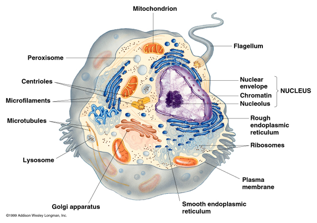 Chapter 7 biology summary plant cell ccuart Image collections